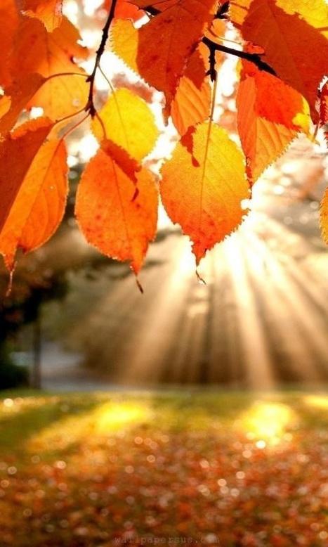 Fall Sunlight...... | Esmeralda | Scoop.it