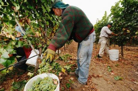 L'année est plutôt aux petites récoltes sur toute la planète | Agriculture en Gironde | Scoop.it