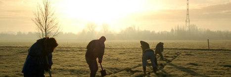 Nord Pas de Calais : Une forêt solidaire sort de terre avec Tree Nation | Patrimoine Végétal et Biodiversité | Scoop.it
