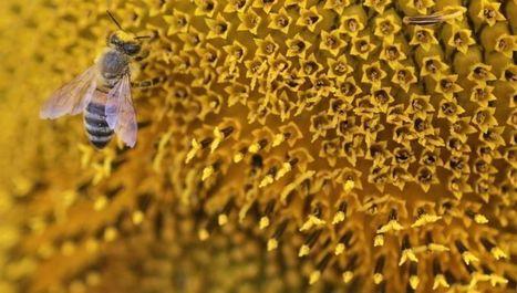 Les apiculteurs demandent l'interdiction de pesticides mortels | Comprendre le réel intérêt de produire une agriculture BIO en France plutôt que d'importer des produits présentant un label pas vraiment Certifié. | Scoop.it