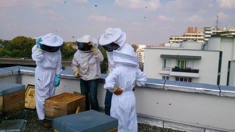 Toulouse : les abeilles d'Empalot produisent leur premier miel | Local et solidaire | Scoop.it