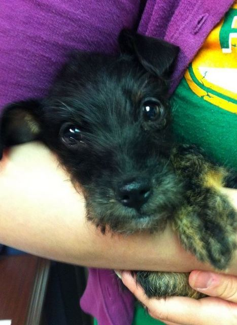 Puppy survives month in abandoned car | Radio Show Contents | Scoop.it
