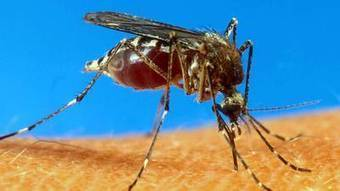California residents cautioned to look out for yellow fever mosquito | Sustain Our Earth | Scoop.it