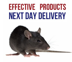 Pestek Pest Control | Pest Control Leeds | Pest Control Products | Pestek Pest Control | Scoop.it