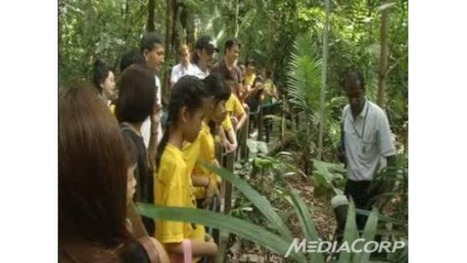 Programme aiming to connect children with nature makes comeback - Channel News Asia | great outdoors | Scoop.it