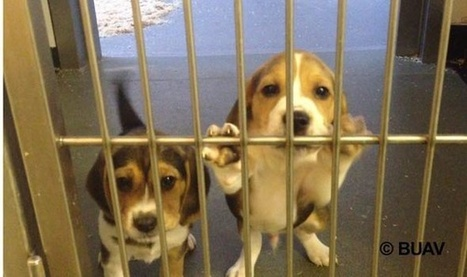 Video Shows Animal Testing On Puppies And Kittens In UK Labs | Global Animal | Nature Animals humankind | Scoop.it