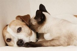 Dogs, cats can teach us about how to commit to a relationship - Baltimore Post-Examiner | Staying Together | Scoop.it