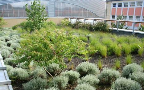 Maison écologique : les toits végétalisés | Géographie : les dernières nouvelles de la toile. | Scoop.it
