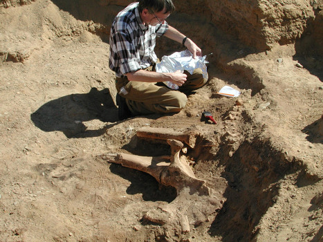 Royal Belgian Institute of Natural Sciences — A team of Belgian archaeologists has found wild...   Egiptología   Scoop.it