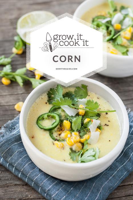 Sweet Corn and Coconut Milk Chowder Recipe | Food glorious food | Scoop.it