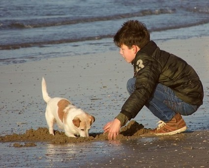 Kids and Dogs: Safe Interactions at the Park   Animal Bliss   Animal Welfare   Scoop.it