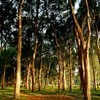 INDONESIA: Forests remain a source of conflict | The Glory of the Garden | Scoop.it