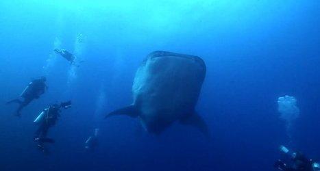 Vidéo HD | Galapagos - Un des plus beaux voyages plongée ! | Plongeurs.TV | Scoop.it