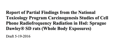 National Toxicology Program: $25 Million Research Study Finds Cell Phone Radiation Causes Cancer // SaferEMR.com | Screen Time, Wireless, and EMF Research | Scoop.it