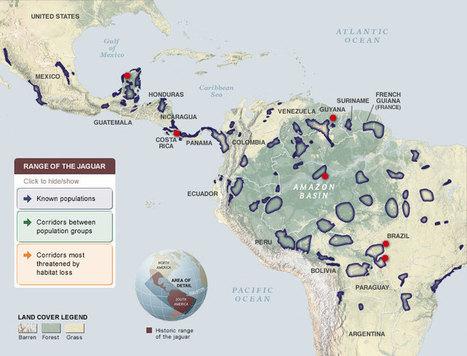 Mapping and Protecting the Biggest Cat in the Americas | Cats Rule the World | Scoop.it