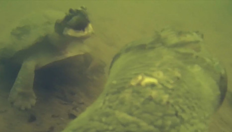 POV Camera Captures Underwater Turtle Interaction for the First Time - DIY Photography | SA Scuba Shack | Scoop.it