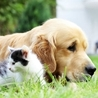 Flea Protection Tips and Tricks For Your Pets