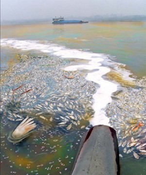 Report: Fast #Fashion Is #Poisoning #China's #Fish ! | Rescue our Ocean's & it's species from Man's Pollution! | Scoop.it