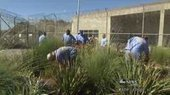 Prison gardens grow new lives for inmates - WHAS 11.com (subscription) | FLORALINK Garden and Landscape Architecture News. | Scoop.it