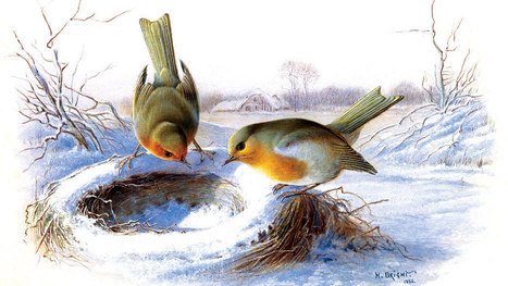 7 Things Winter Birds Want From Us | Our Evolving Earth | Scoop.it