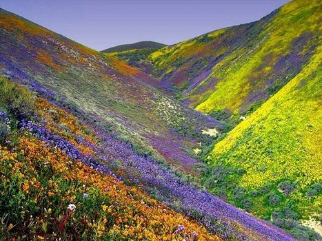 Valley of Flowers | How are the flowers in valley of fire nevada,I am driving there this morning,hope to see you there | Scoop.it