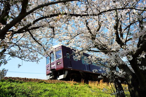 Sakura of Hankyu Railway | Artophilia - Because we need Art in our Life | Scoop.it