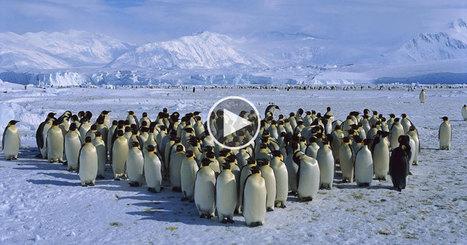 Who Actually Owns Antarctica? | Antarctica | Scoop.it