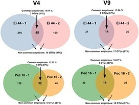 Intracellular Diversity of the V4 and V9 Regions of the 18S rRNA in Marine Protists (Radiolarians) Assessed by High-Throughput Sequencing | Protist evolution and biology | Scoop.it