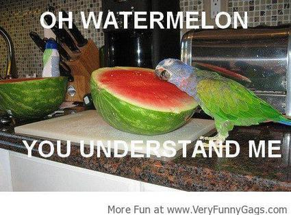 Oh Watermelon!   Funnygags   Scoop.it