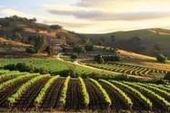 South Australia: Race among the vines | Vitabella Wine Daily Gossip | Scoop.it