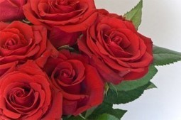 Rose Day 2014 Wallpapers | Valentines Day 2014 | ValentinesDay2014 | Scoop.it