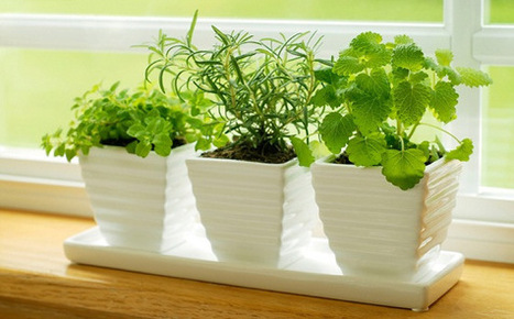 Grow Herbs Indoors For A Personal Garden | News and Articles | Scoop.it