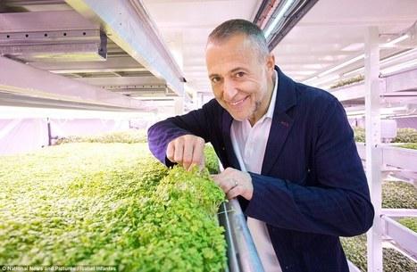 Michel Roux Jr se lance dans la première ferme underground, dans un ancien bunker de Londres   Food and design   Scoop.it