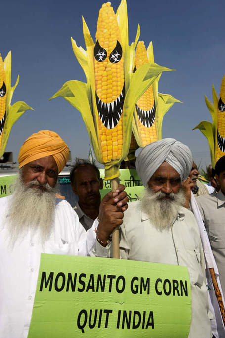 Peasants for Food Sovereignty: North Indian farmers destroy Monsanto's GM corn field trials | YOUR FOOD, YOUR HEALTH: Latest on BiotechFood, GMOs, Pesticides, Chemicals, CAFOs, Industrial Food | Scoop.it