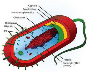 Hallan un mecanismo de transferencia de genes entre distintos organismos / Noticias / SINC - Servicio de Información y Noticias Científicas | Microbiología Industrial | Scoop.it