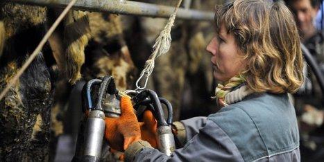 Agriculteur, radiographie d'une profession en crise et en colère | Agriculture en Dordogne | Scoop.it