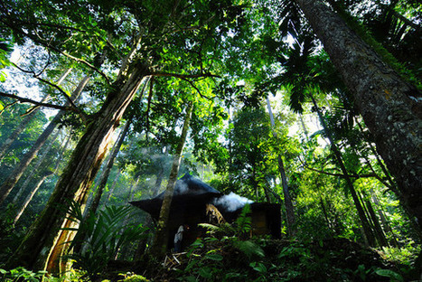 What Role Do Indigenous Peoples and Forests Have in a Sustainable Future? - Huffington Post | Rainforest EXPLORER:  News & Notes | Scoop.it