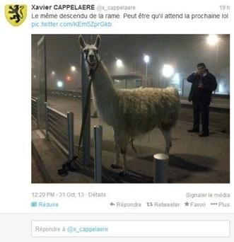 France - Insolite Lama dans le tramway à Bordeaux : Serge Lama ... - Bien Public | Serge le lama | Scoop.it
