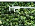 Frozen food supplier of IQF frozen vegetables & fruits-Homeway Foods | Frozen food china | Scoop.it