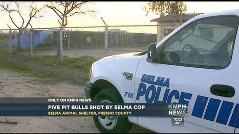 Cop Shoots & Kills 5 Caged Dogs At Animal Shelter   Animal Shelter voulenteer   Scoop.it