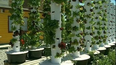 Farmer's market goes hi-tech to save space | Vertical Farm - Food Factory | Scoop.it