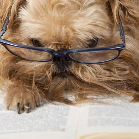 Hey Google, We Still Love Reader | The Social Business Studio | Scoop.it