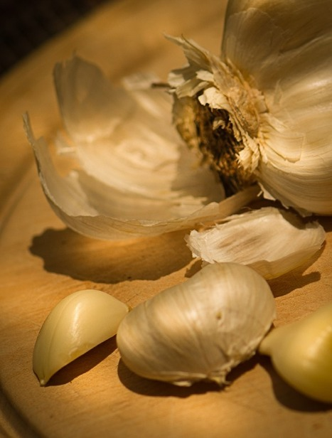 Plants With Benefits: National Garlic Day! | Natural Soil Nutrients | Scoop.it
