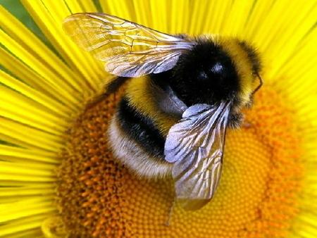 La moria delle api sta mettendo in serio pericolo gli ecosistemi mondiali   Ambiente - Environmental   Scoop.it