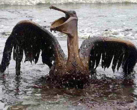 #Ecologists say #BP's $4.5 billion fine won't vindicate #Wildlife cruelties ~ Could pave the way for Restoring our #Oceans #SeaLife rescues... #Aquarius ? | Rescue our Ocean's & it's species from Man's Pollution! | Scoop.it