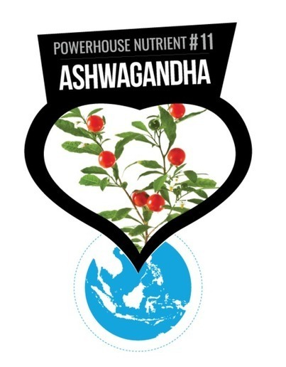 """""""5 Major Benefits of the Indian Adaptogen Ashwagandha 
