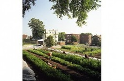 Urban Farms are Sprouting Up Across the Globe | | The Barley Mow | Scoop.it