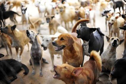 The 10 Dog Breeds That Bark The Most | Dog Lovers | Scoop.it