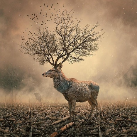 10 – Beautiful #Surreal Images By Caras Ionut #art #photography #nature #collage | Luby Art | Scoop.it
