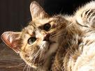 Cat travels 190 miles to return home   Odd basement   Scoop.it
